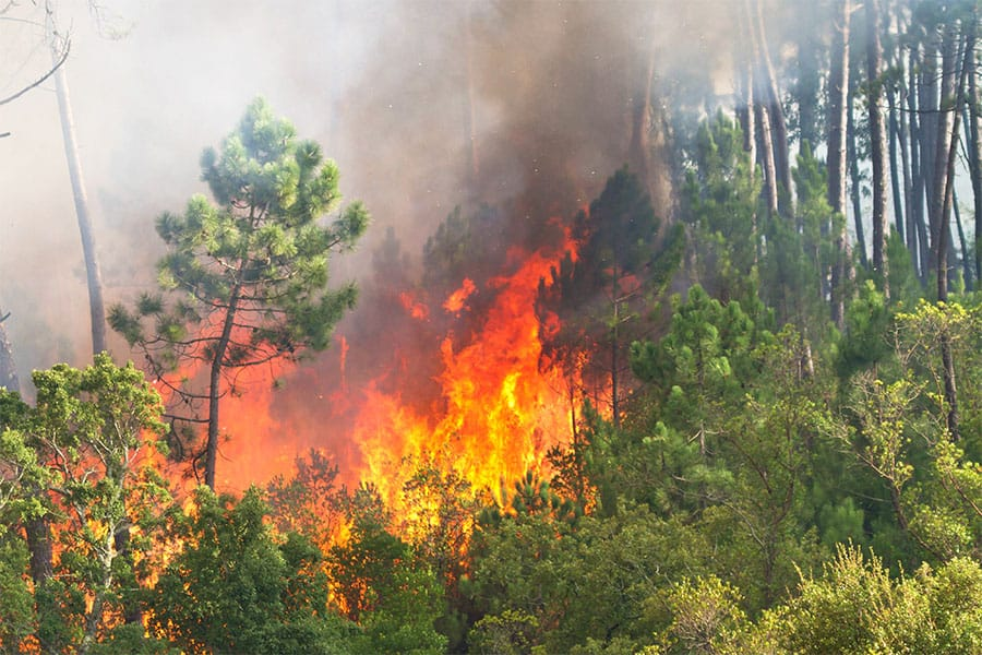 Air quality monitoring during forest fire